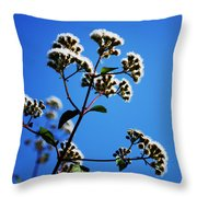 Ageratina Adenophora  Throw Pillow