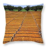 Agriculture - Blenheim Apricots Throw Pillow