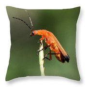 Ah - I Made It To The Top Throw Pillow