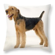 Airedale Terrier Dog Throw Pillow