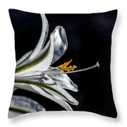Ajo Lily Close Up Throw Pillow by Robert Bales