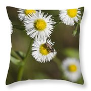 Alabama Wildflower Robin's Plantain - Erigeron Pulchellus Throw Pillow