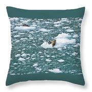 Alaska Seals Throw Pillow
