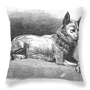 Alaskan Husky Throw Pillow by Granger