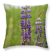 Alaskan Lupines Throw Pillow
