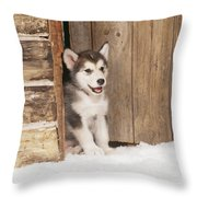 Alaskan Malamute Puppy Throw Pillow