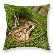 Alaskan  Throw Pillow