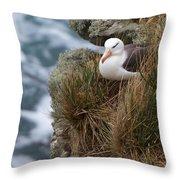 Albatross Rookery Throw Pillow