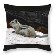Albert Squirrel Throw Pillow