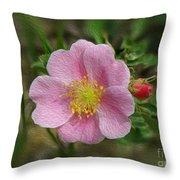 Alberta's Wild Rose Throw Pillow