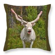 Albino Reindeer Throw Pillow
