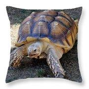 Aldabra Tortoise Throw Pillow