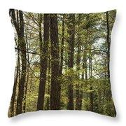 Aldridge Lake Trail Throw Pillow