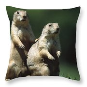 Alert Black-tailed Prairie Dogs Throw Pillow