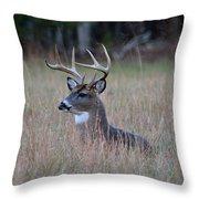 Alert Buck Throw Pillow