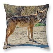 Alert Coyote Throw Pillow