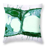 Algae Cell Division, Cylindrocapsa Throw Pillow