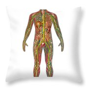 All Body Systems In Male Anatomy Throw Pillow