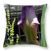 All Closed Up Throw Pillow