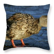 All Shook Up Throw Pillow