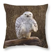 All Turned Around  Throw Pillow