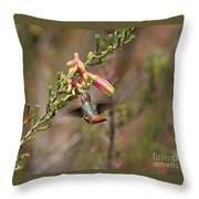 Allen Hummingbird In Flight Throw Pillow
