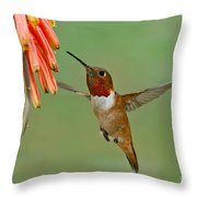Allens Hummingbird At Flowers Throw Pillow