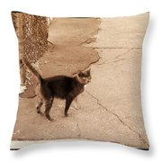 Alley Cat Throw Pillow