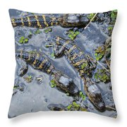 Alligator Babies IIi Throw Pillow
