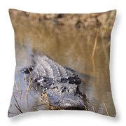 Alligator In Evergrades Throw Pillow