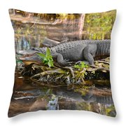 Alligator Mississippiensis Throw Pillow by Christine Till