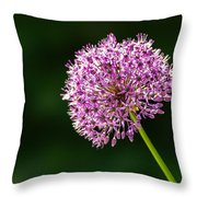 Allium Flower Throw Pillow