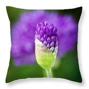 Allium Hollandicum Purple Sensation Throw Pillow