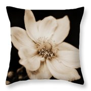 Alluring Anemone Throw Pillow