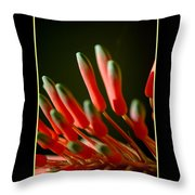 Aloe Bloom Window 2 Throw Pillow