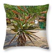 Aloe Plant In Kruger National Park-south Africa Throw Pillow