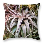Aloe Vera Cactus Succulent Plant Indoor In Summer Throw Pillow