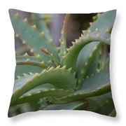 Aloe Vera Leaves  Throw Pillow