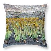 Aloevera Plantation Lanzarote Throw Pillow