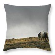 Alone - Wild Horse - Green Mountain - Wyoming Throw Pillow