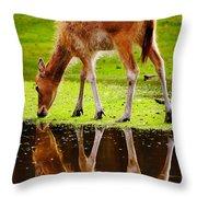 Along The Water Grazing Pere David's Deer Throw Pillow