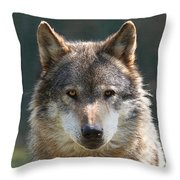 Alpha Male Wolf - I'm Watching You Throw Pillow