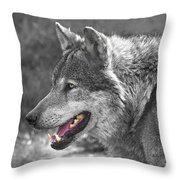 Alpha Male Wolf - You Look Tasty Throw Pillow