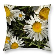 Alpine Daisies In Glacier National Park Throw Pillow