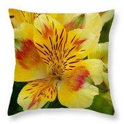 Alstroemerias Flower 1 Throw Pillow