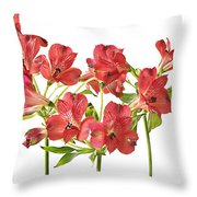 Alstromeria Throw Pillow