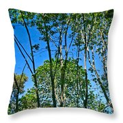 Alternate Reality - Reflected View Of The Forest From A Pond In Garland Ranch Park In Carmel Valley. Throw Pillow