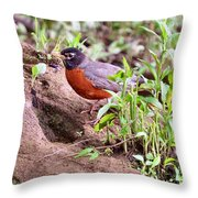 Am Robin Throw Pillow