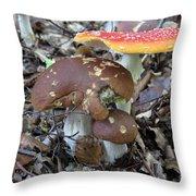 Amanita Muscaria And Edible Boletus Throw Pillow