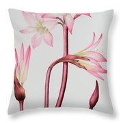 Amaryllis Belladonna Throw Pillow